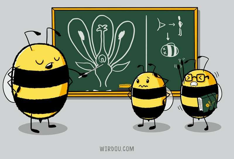 flor, abejas, biología, ciencia, divertido, gracioso, polen, polinizar, estudiantes, sabelotodo