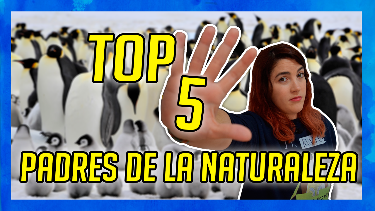 miniatura yputube top 5 padres