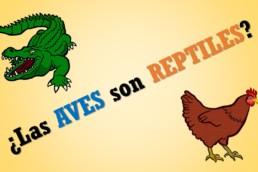 Portada aves son reptiles