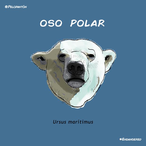 oso_polar_pelopanton