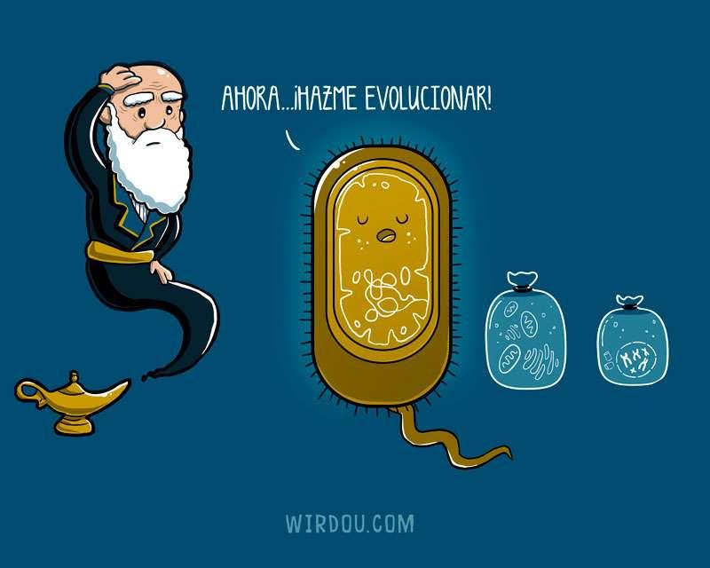 bacteria, ciencia, divertido, evolución, darwin, endosimbiosis, procariota, eucariota