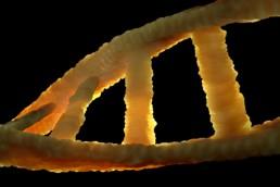 A Ciencia Cierta Secuenciando el ADN y sus aplicaciones