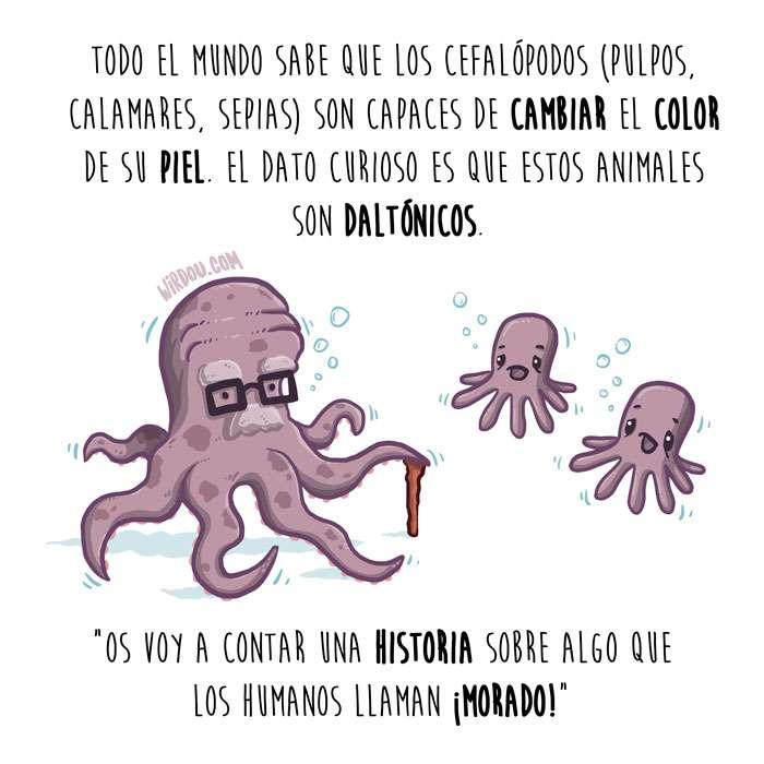 ciencia, divertido, cefalópodos, camuflaje, color, daltonismo, pulpos, sepias, calamares