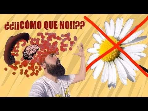 La margarita no es una flor