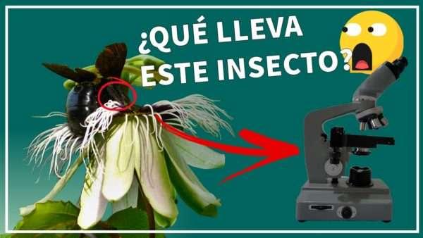¿Que lleva este insecto?