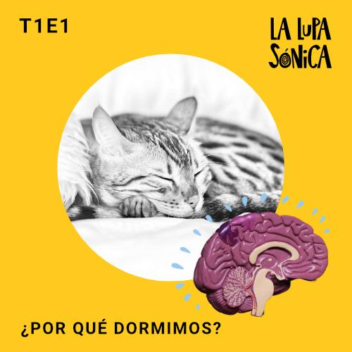 Por qué dormimos - La Lupa Sónica Podcast ciencia para niños